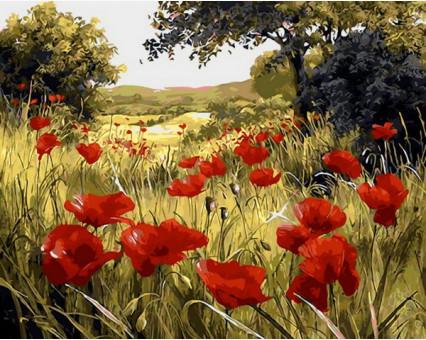 MR-Q1432 Картина раскраска Маковая поляна Mariposa