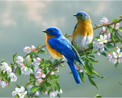 MR-Q809 картина по номерам Птички на яблоне Mariposa