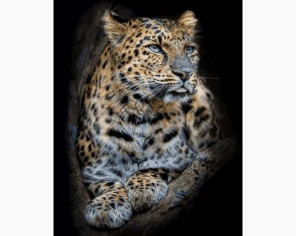 VP684 картина по номерам Гордый леопард DIY Babylon