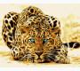 BK-GX4175 Картина раскраска Леопард (Без коробки)